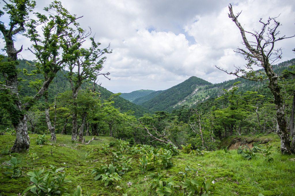 八経ヶ岳(奈良県/台高山脈)