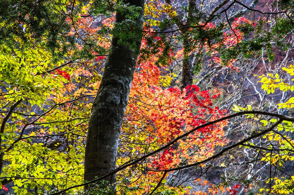 静かな古の道を歩く(奈良県/大峰山脈)