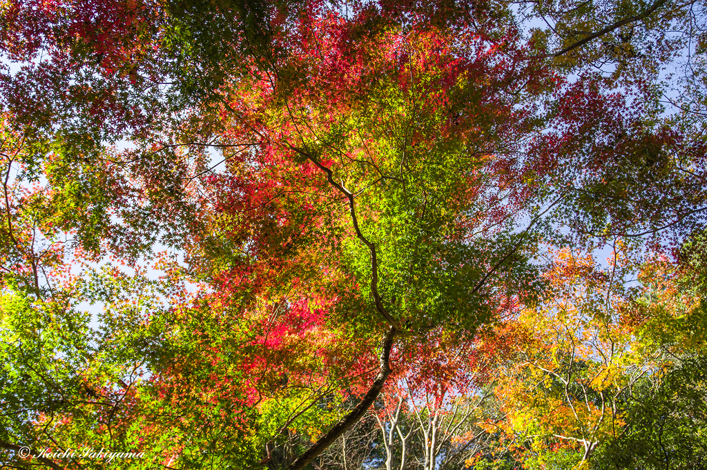 春日山原始林(奈良県)