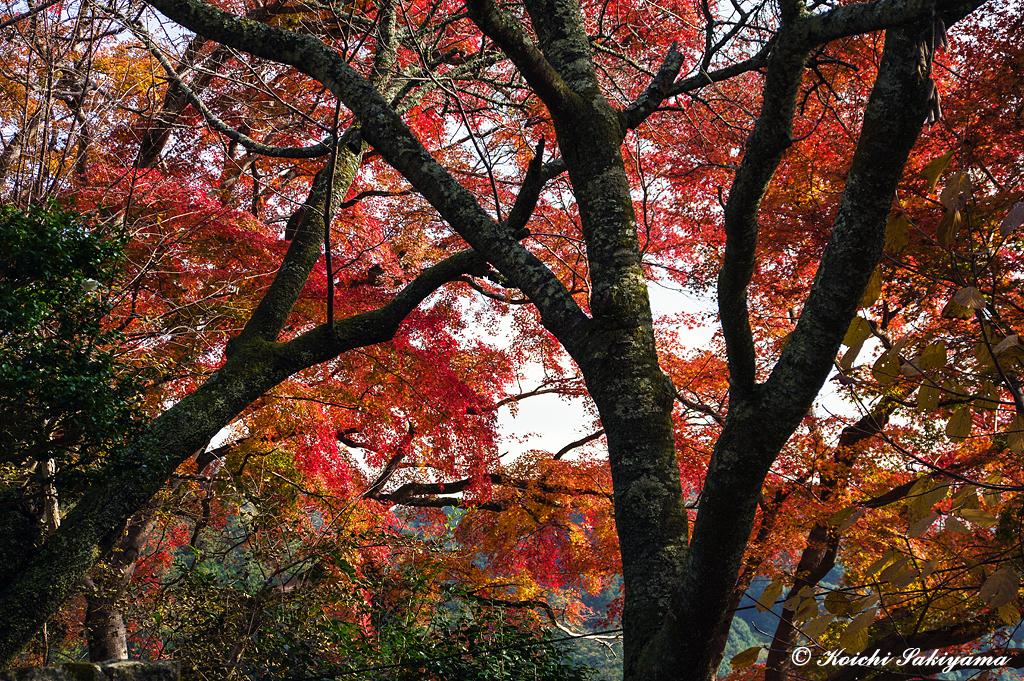 大和國長谷寺(奈良県桜井市)