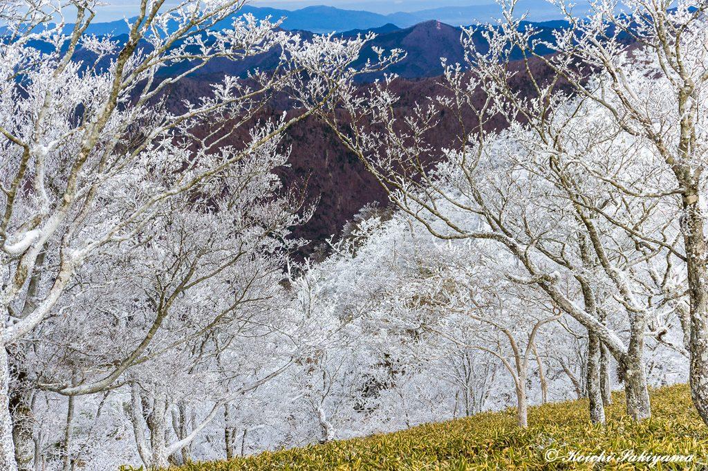 柔らかな日差しに輝く霧氷の森