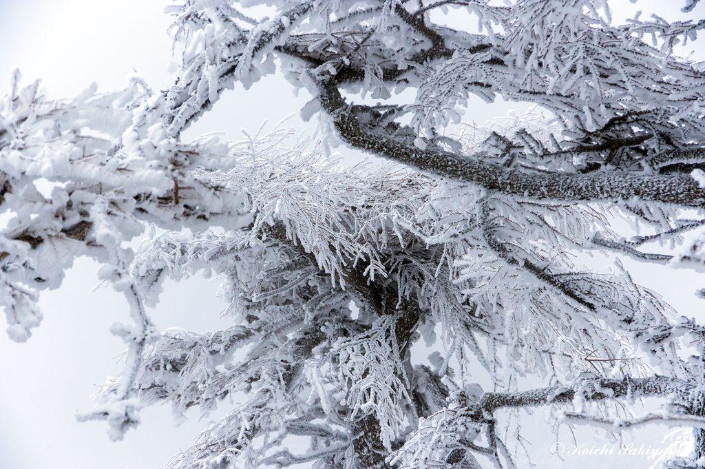 木々の細かな枝葉にも氷の世界は広がっています。