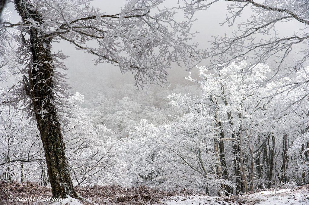 厳冬期を思わせる霧氷の状態