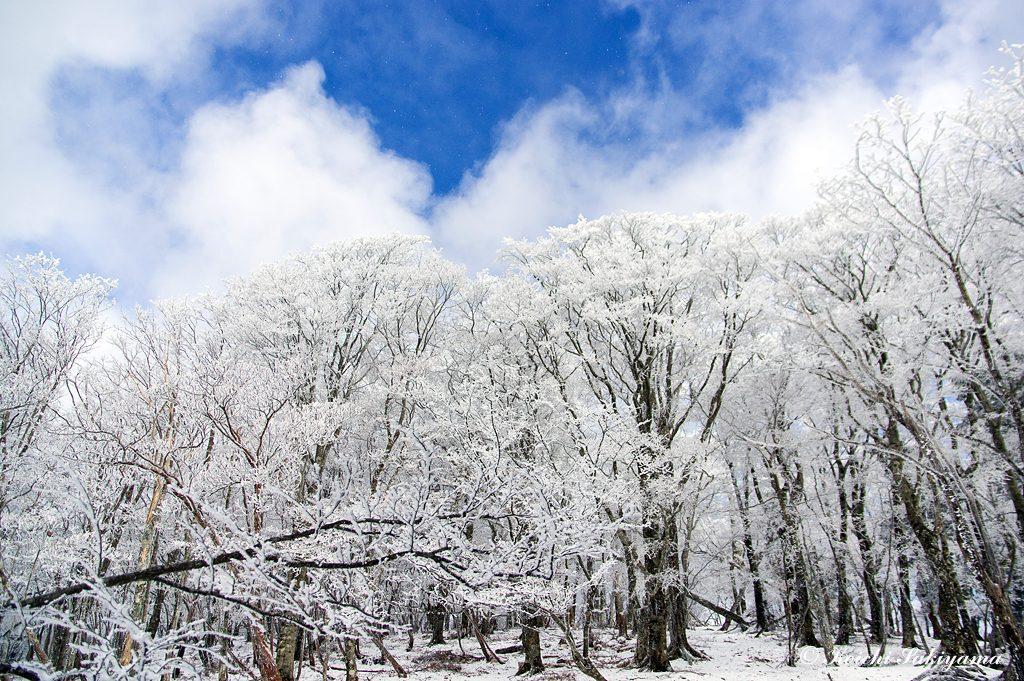 明神岳から桧塚奥峰へ向かう森の美しく冬化粧