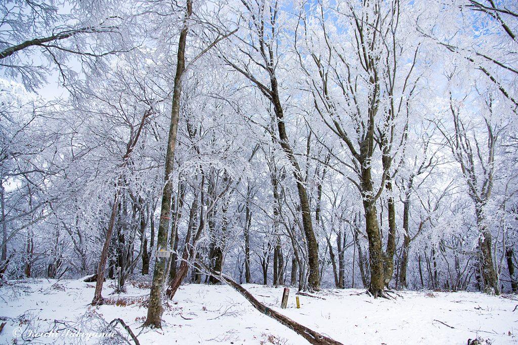 判官平周辺の冬景色