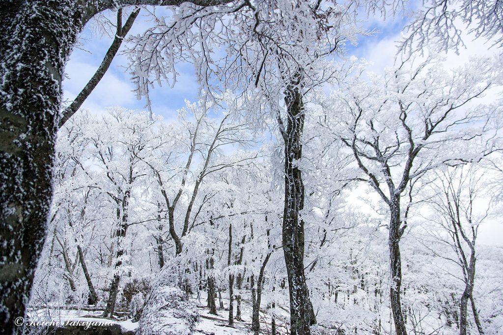 輝く森…冬山歩きのご褒美です。
