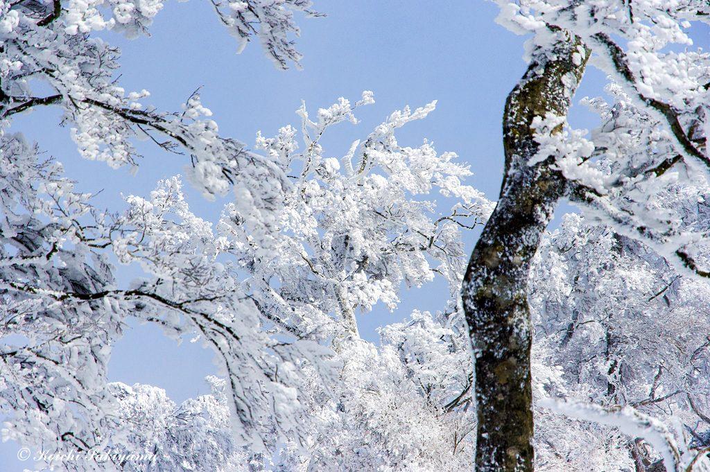 霧氷と青空のコラボレーション…至福のひと時