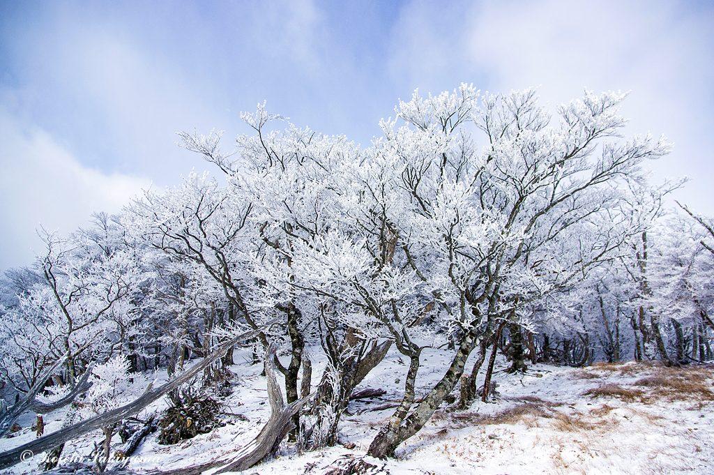 桧塚奥峰山頂部の霧氷風景