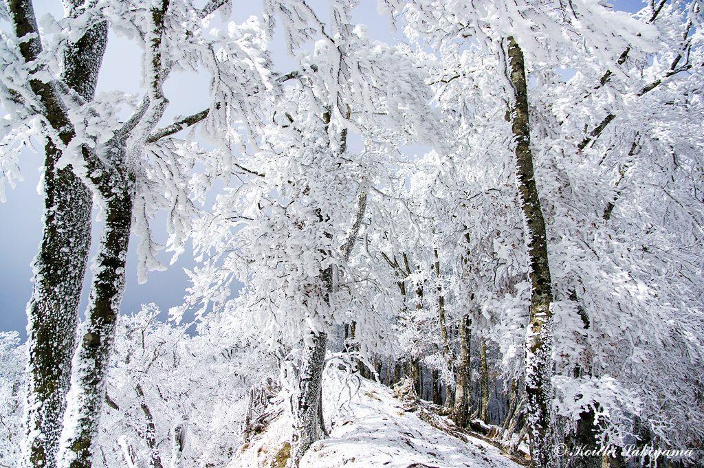 明神岳(穂高明神)付近の尾根は分厚い霧氷に覆われていました。