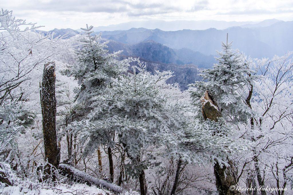 針葉樹につく霧氷は彩があって美しいです。