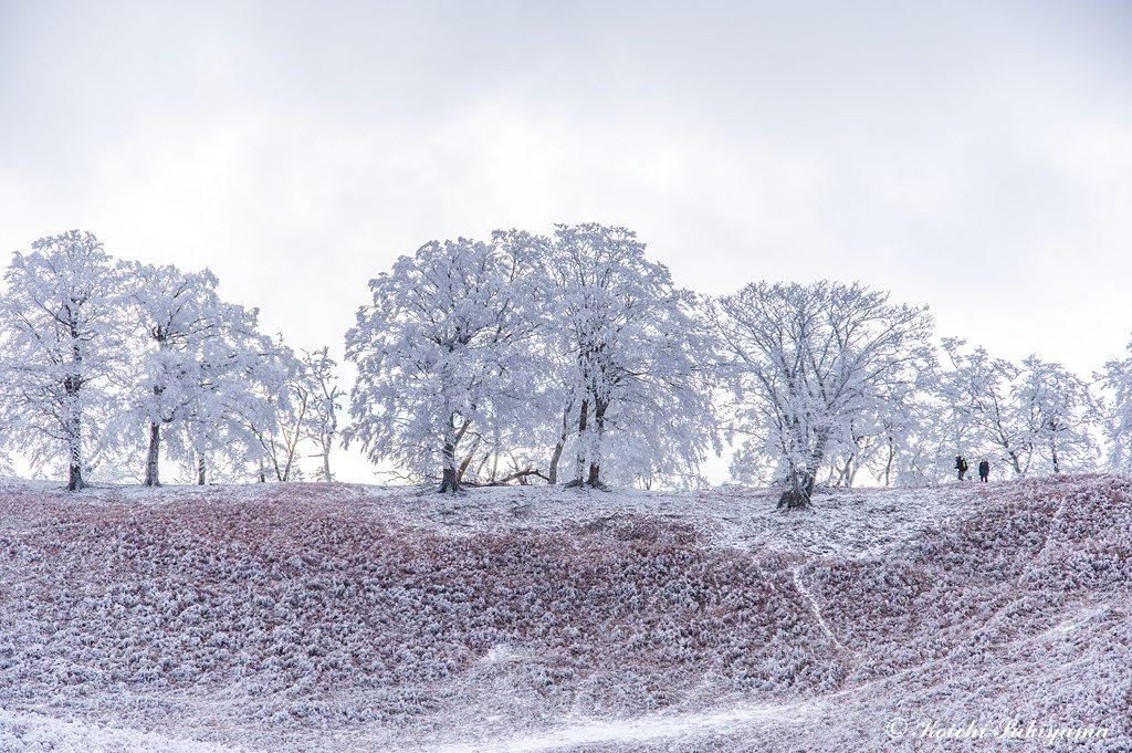 逆光に霧氷のつく木々がシルエットに