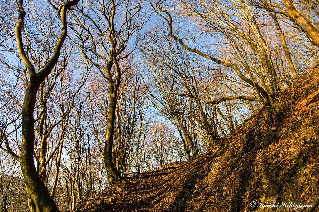 落葉した森はオレンジ色と空色に彩られます。