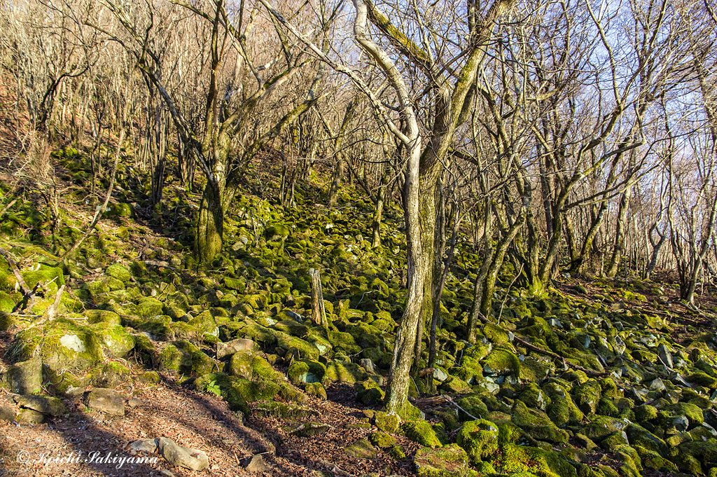 苔に包まれた岩が覆う斜面も朝日に彩られます。