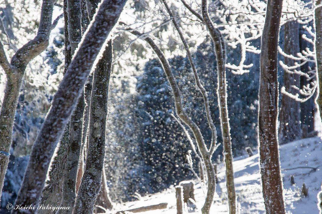 煌めく落氷はとても幻想的な雰囲気