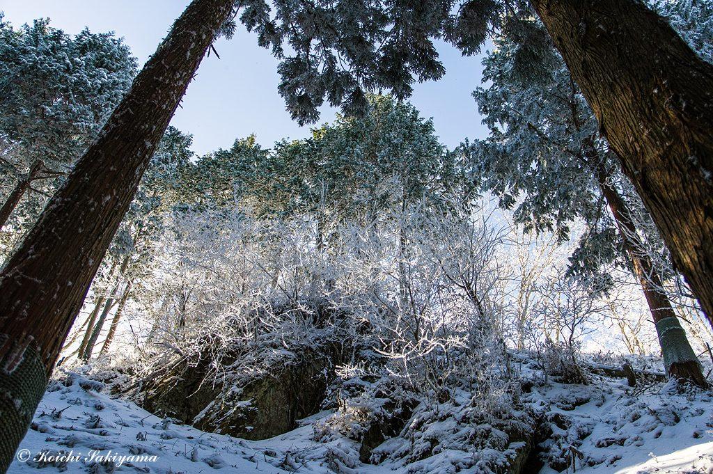 小さな霧氷ですが青空と日差しが良い雰囲気にしてくれます。