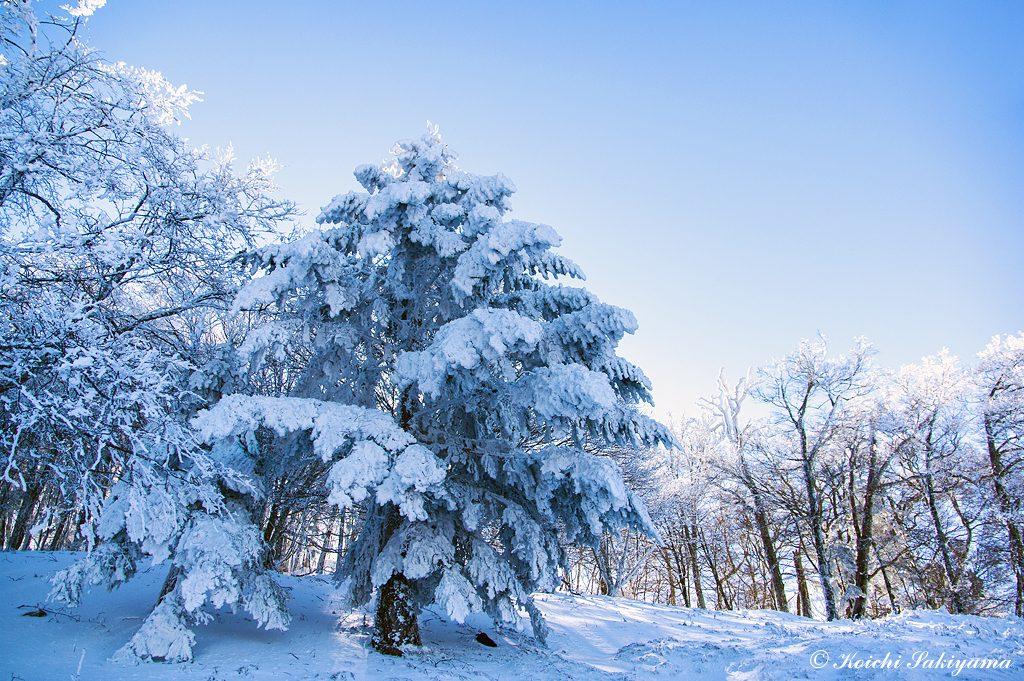 日差しを背に受ける木々は、深い色合いに染まります。