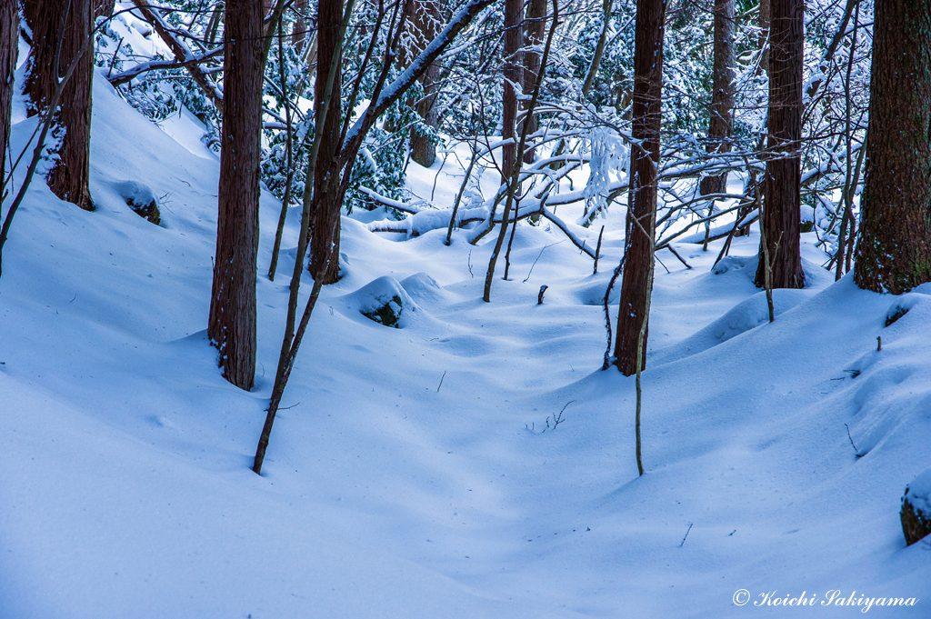 九十九折れの登山道が植林地を縫う表参道コース