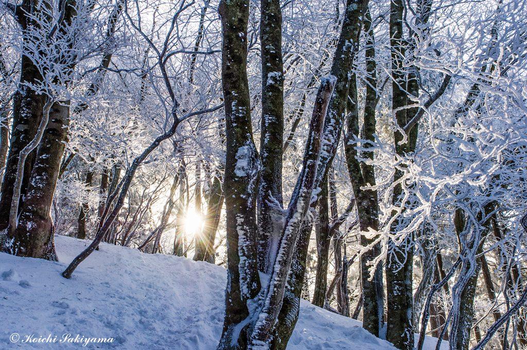 陽が高く登り始めると森にも輝きが…