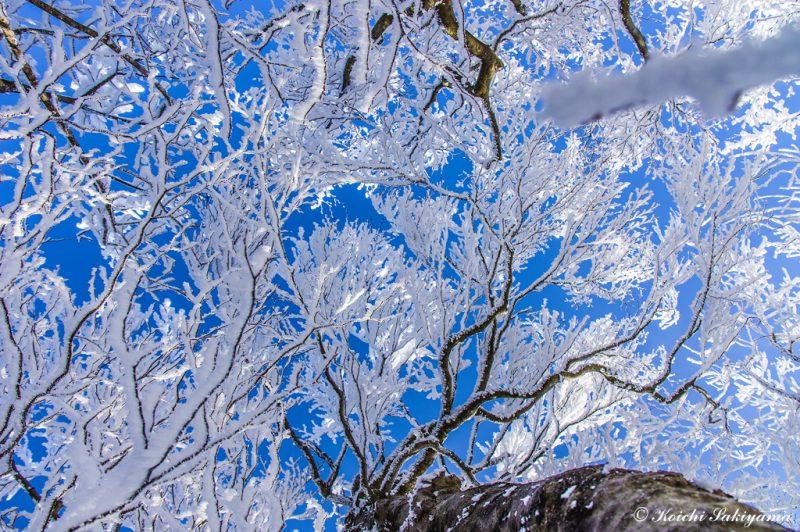 登山道の霧氷風景