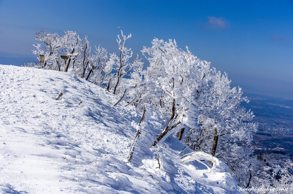 竜王山への周回コース分岐点…北側の尾根には小さな木々に大きな霧氷がついています。