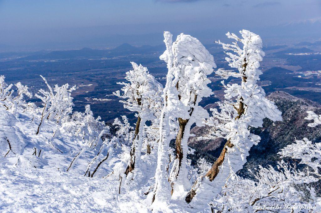 風雪が強い場所で大きな木はありません。こんなちびモンスターがいっぱい(笑)