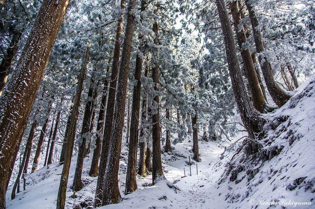 植林地帯に日差しが入ると美しさが際立ちます。