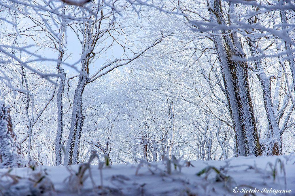 朝の日差しを浴びて輝く森