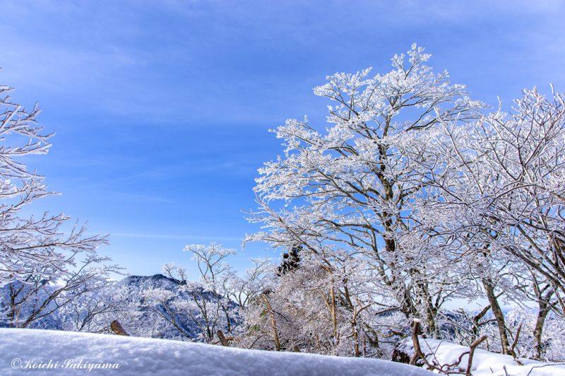 青空と霧氷のコラボ
