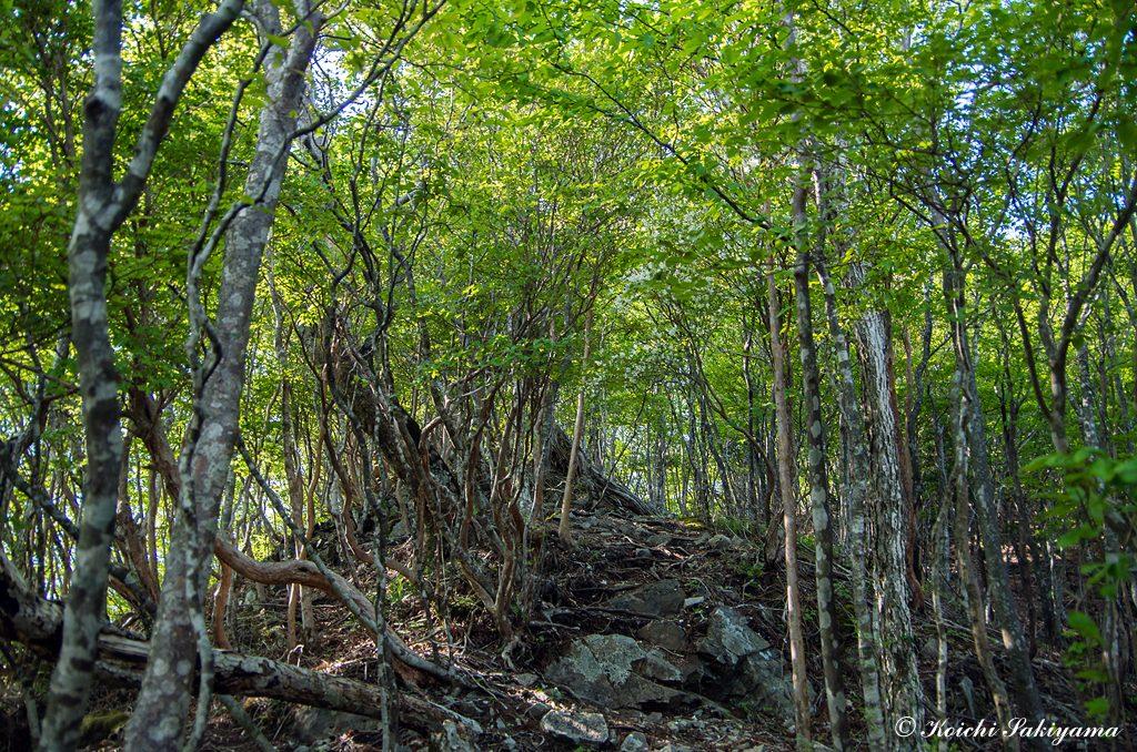 気持ちイイ新緑の森