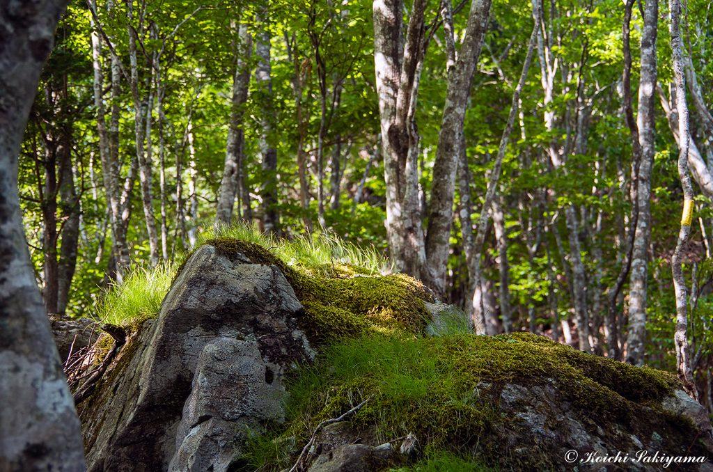 岩につく苔や草にも時の流れを感じる
