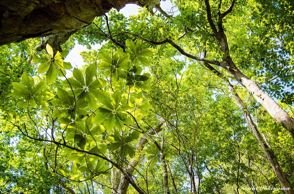 新緑の季節この構図で幾度とシャッターを切る