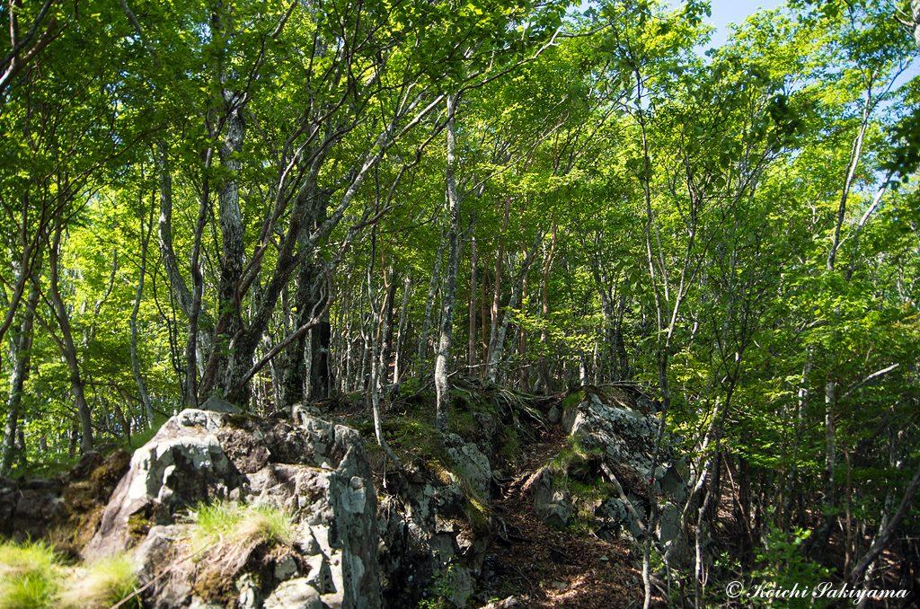 整備された登山道ではなく自然の山を満喫できる山道
