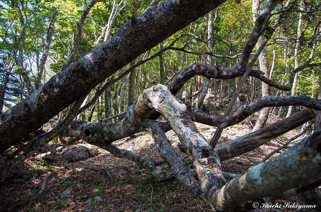 倒木にもどこか自然の摂理を感じる