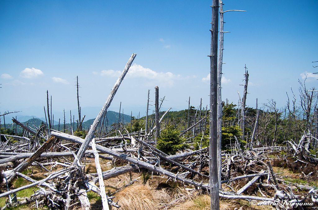 弥山手前の大倒木地帯