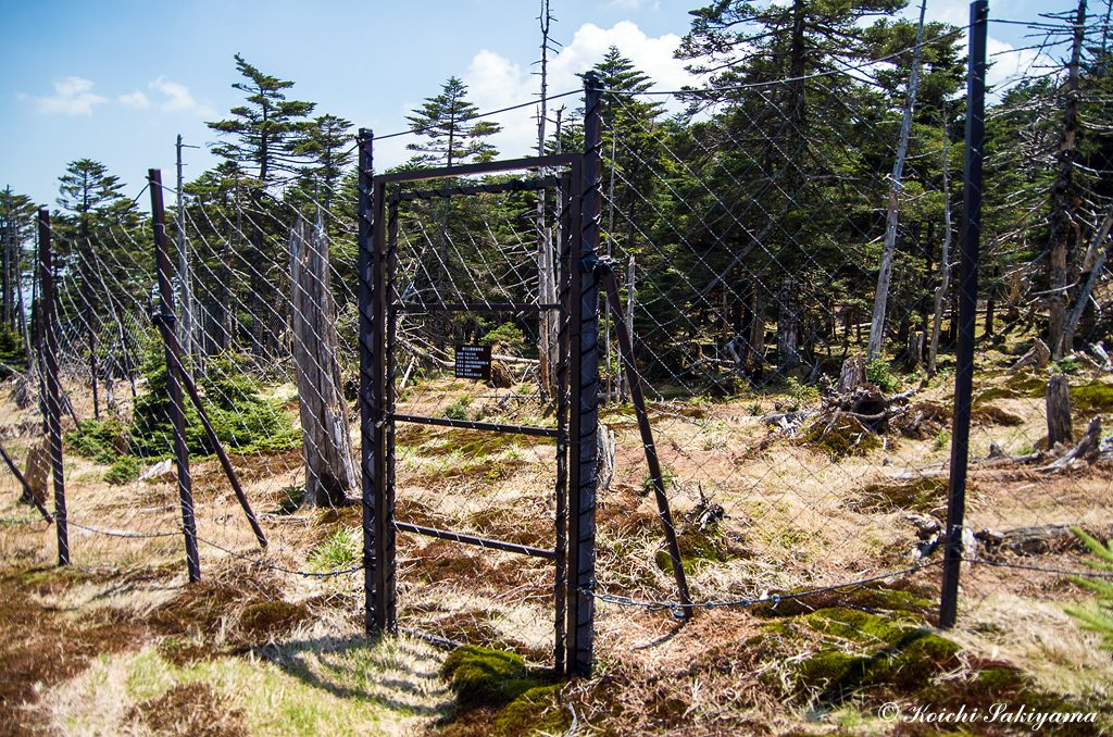 弥山周辺に設置されている鹿除けネット