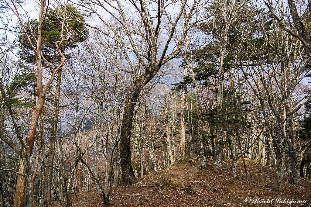 和佐又山のコルから笙の窟尾根へ向かう尾根には積雪はなし