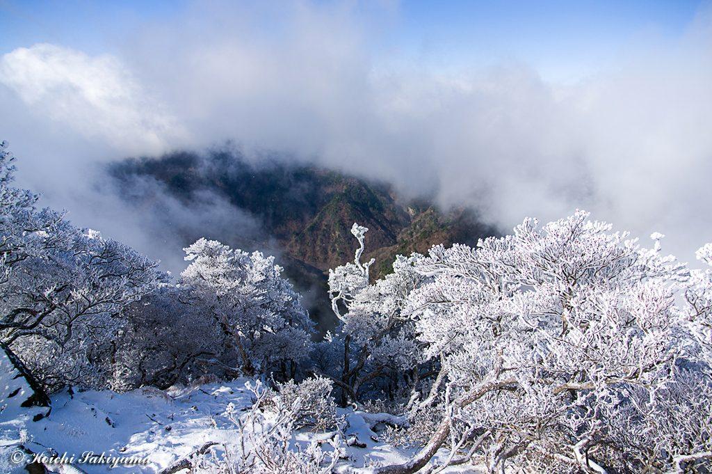 稲村方面はガスの中ですが、素晴らしい霧氷が出迎えてくれました。