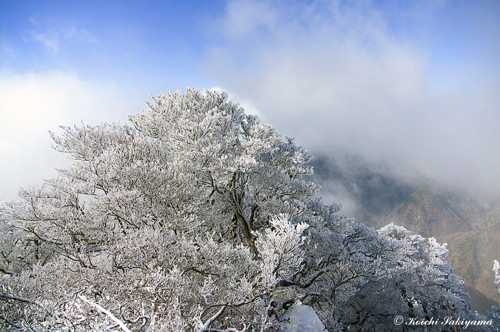 もちろん厳冬期のような霧氷ではありませんが美しい