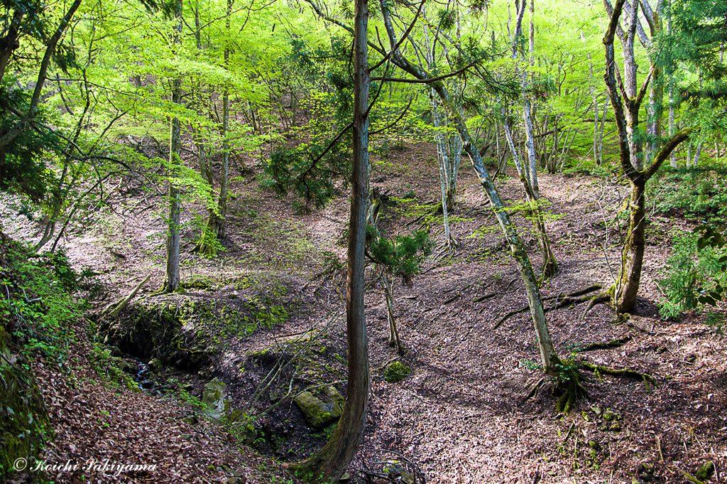 落葉広葉樹の森に流れる静かな渓流