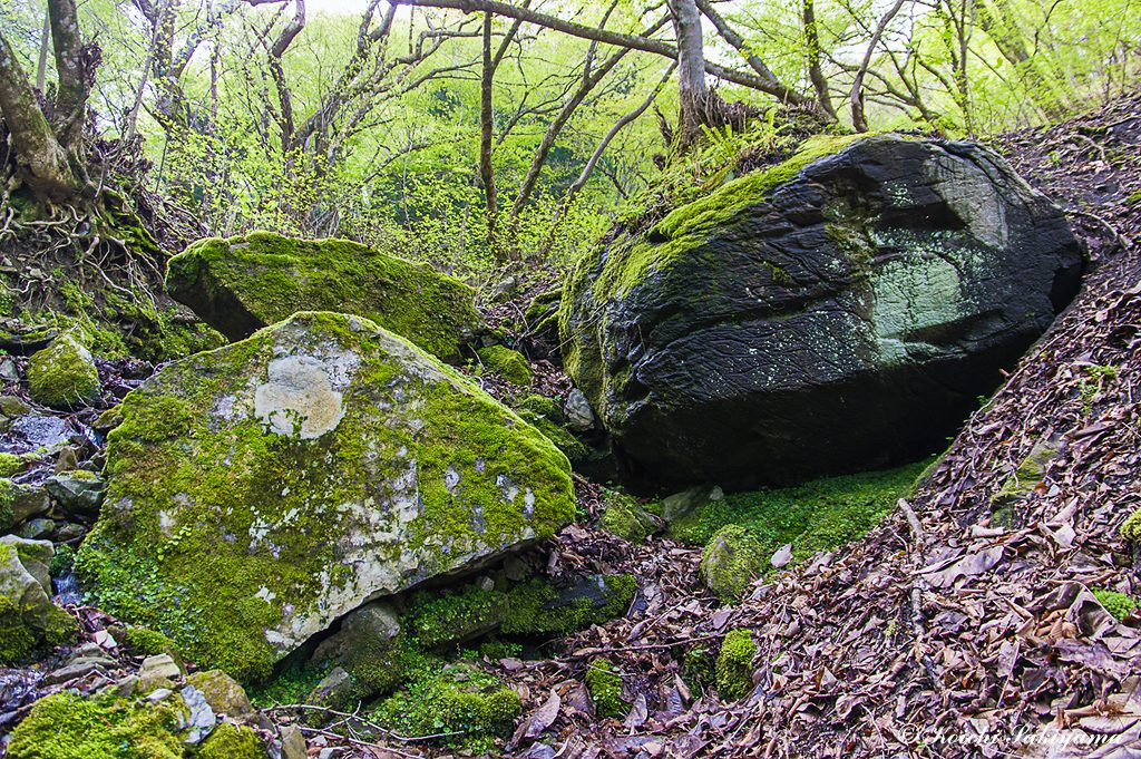 岩につく苔が湿潤な場所の証