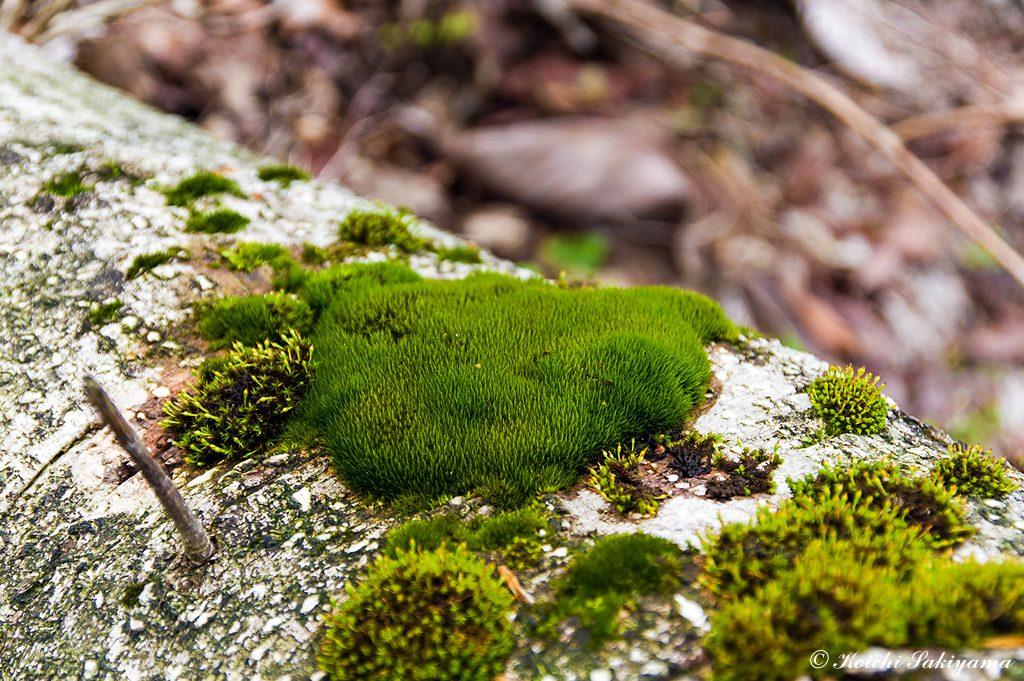 倒木にも美しい苔