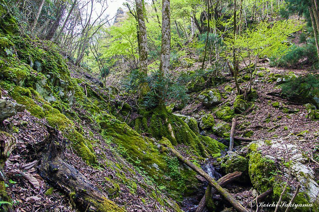 支谷から流れ込む沢の水