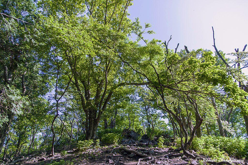 尾根には広葉樹林の新緑