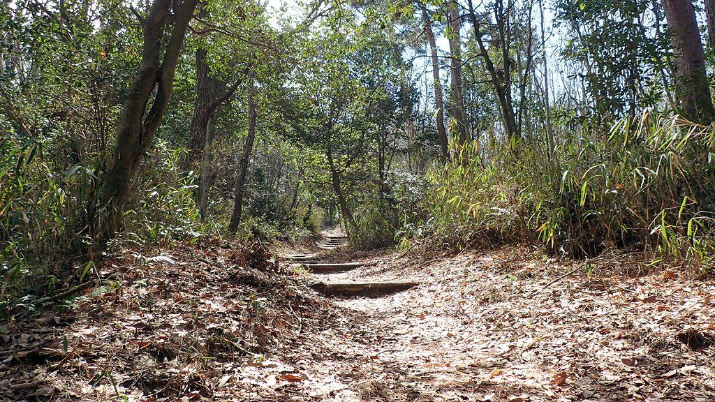 よく整備された歩きやすい登山道