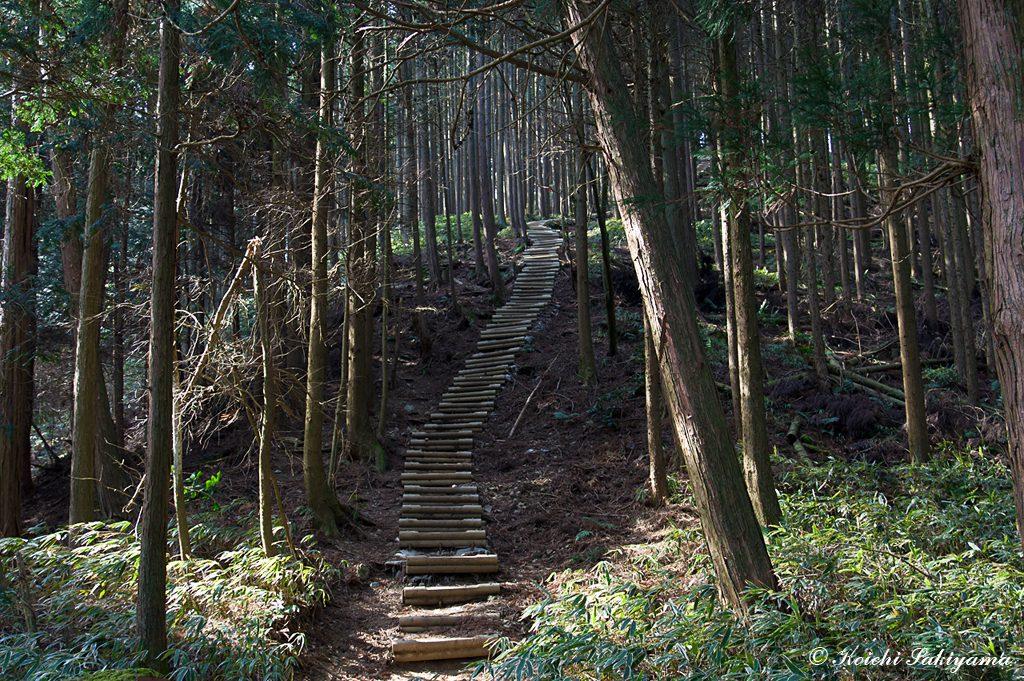 ダイトレを南に登れば中葛城山