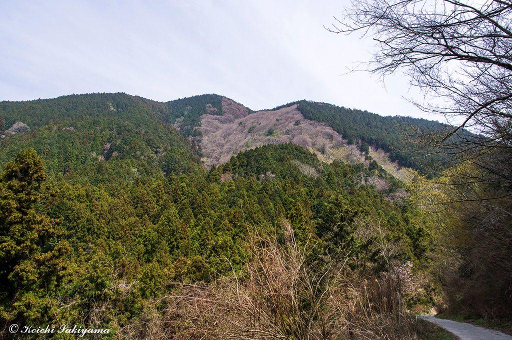 水越峠近くから大和葛城山方面