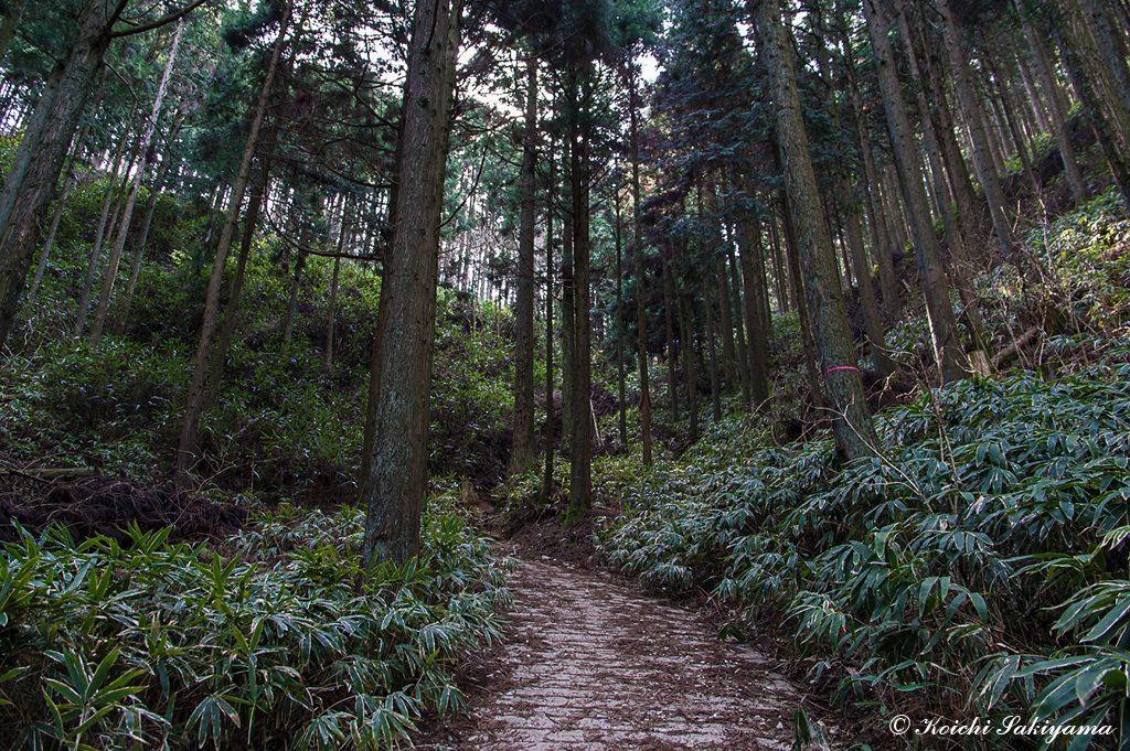 林道終点…舗装道はここまで