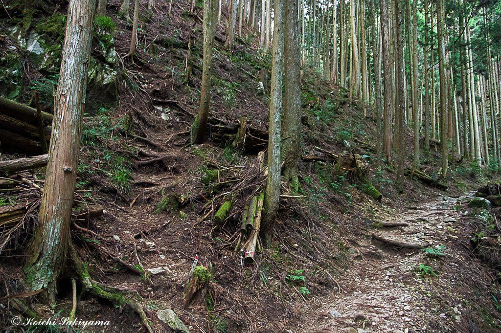ツツジ尾谷から松の木道への分岐箇所
