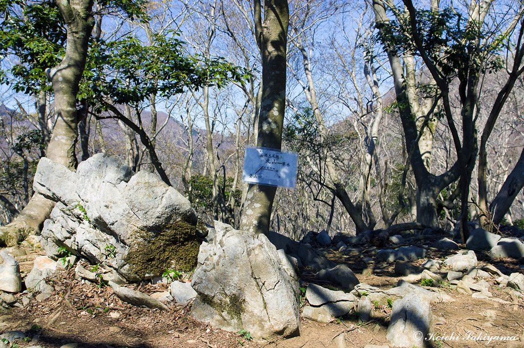丸山(645m)周辺は、石灰岩が点在し、その隙間から多くの花が顔を覗かせます