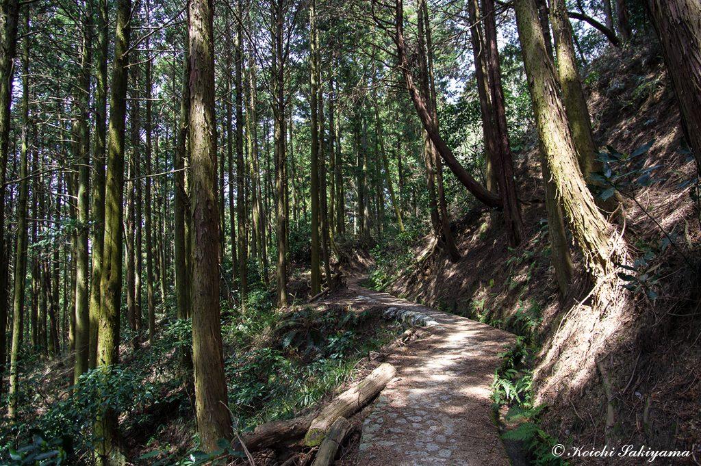大和葛城山へもよく整備された登山道が続く